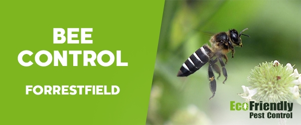 Bee Control Forrestfield