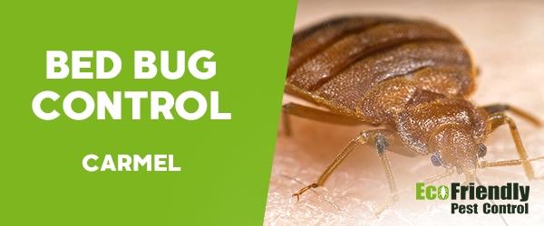Bed Bug Control Carmel
