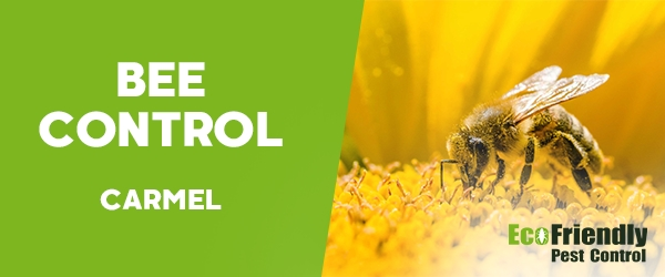 Bee Control Carmel