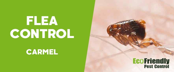 Fleas Control Carmel