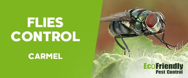Flies Control Carmel