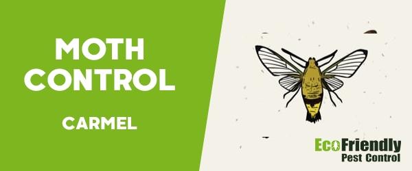 Moth Control Carmel