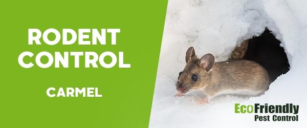 Rodent Treatment Carmel