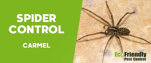 Spider Control Carmel