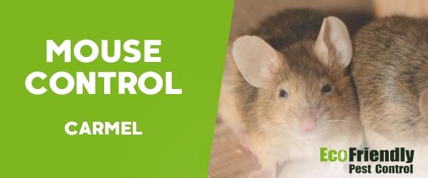 Mouse Control Carmel