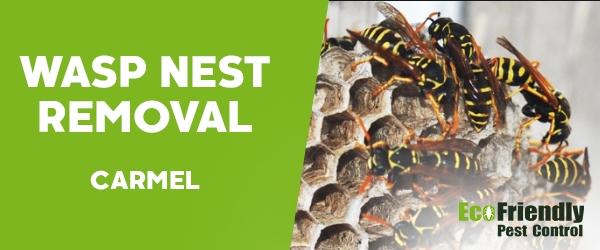 Wasp Nest Remvoal Carmel