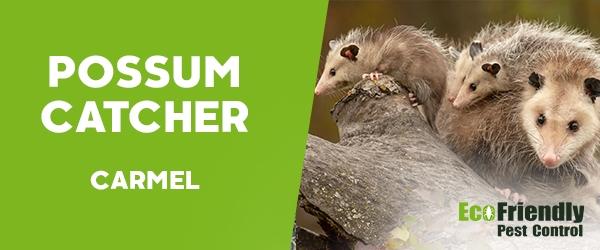 Possum Catcher Carmel