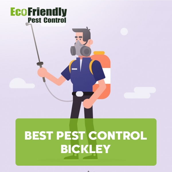 Best Pest Control Bickley