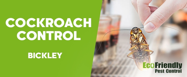 Cockroach Control Bickley