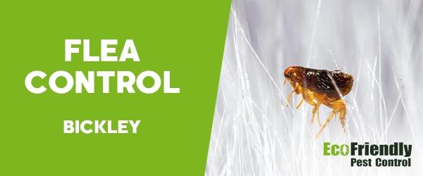 Fleas Control Bickley