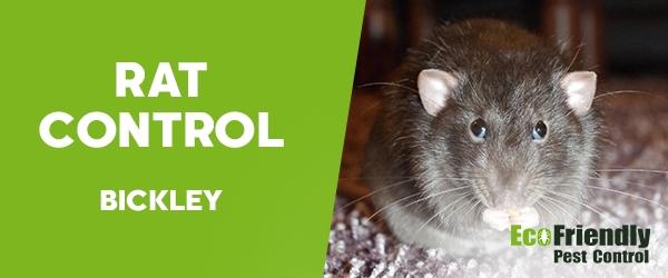 Rat Pest Control Bickley