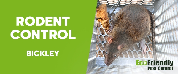 Rodent Treatment Bickley