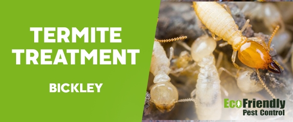 Termite Control Bickley