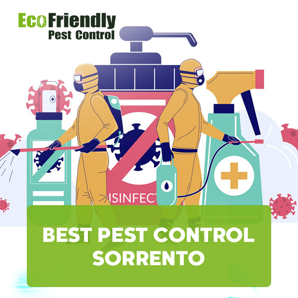 Best Pest Control Sorrento