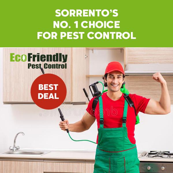 Pest Control Sorrento