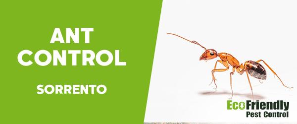 Ant Control Sorrento