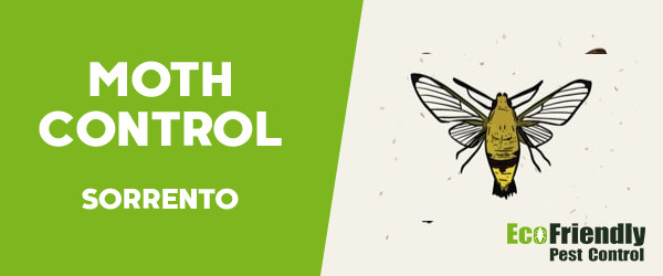 Moth Control Sorrento