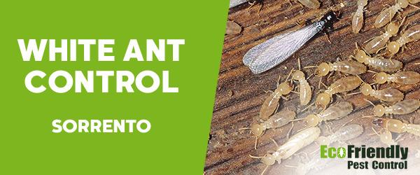 White Ant Control Sorrento