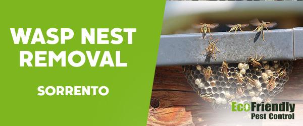 Wasp Nest Remvoal Sorrento