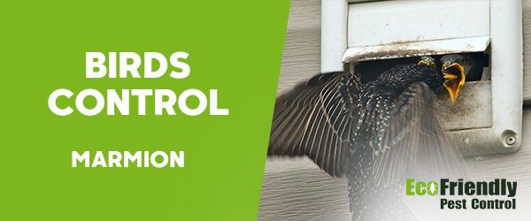 Birds Control Marmion