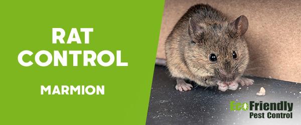 Rat Pest Control Marmion