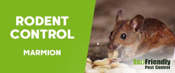 Rodent Treatment Marmion
