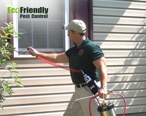 Pest Control Marmion