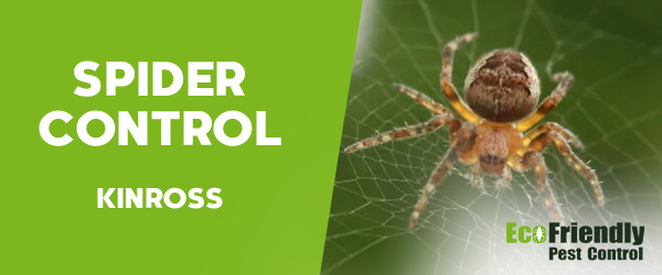 Spider Control Kinross
