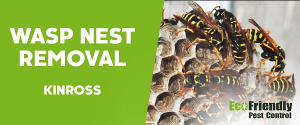 Wasp Nest Remvoal Kinross