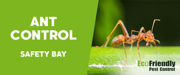 Ant Control Safety Bay