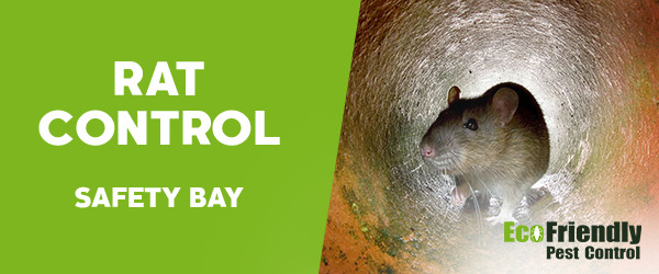 Rat Pest Control Safety Bay