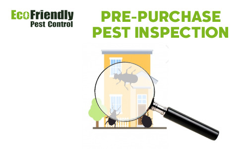 Pre-purchase Termite Inspection Hillarys