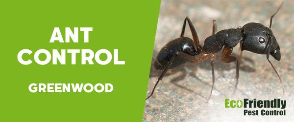Ant Control Greenwood