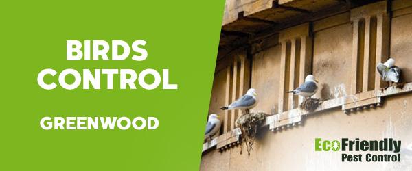 Birds Control Greenwood