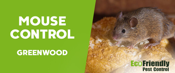 Mouse Control Greenwood