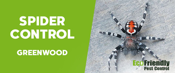 Spider Control Greenwood
