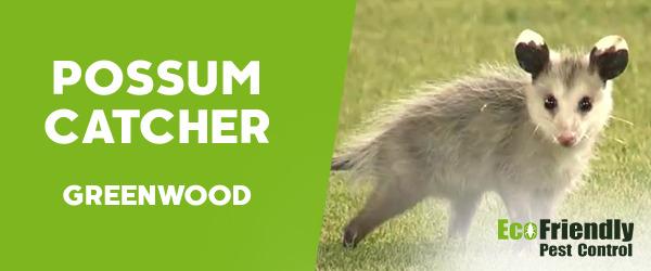 Possum Catcher Greenwood