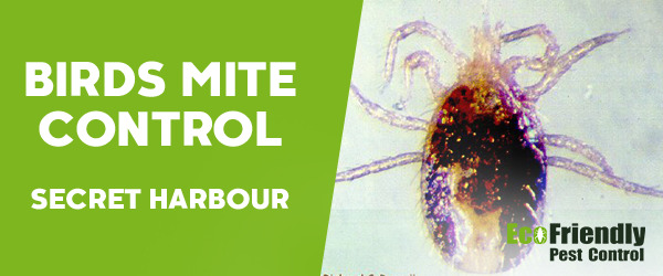 Pest Control Secret Harbour