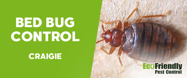 Bed Bug Control Craigie