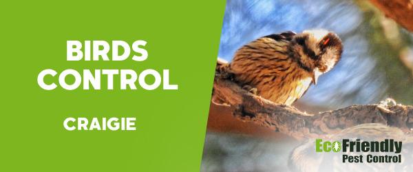 Birds Control Craigie