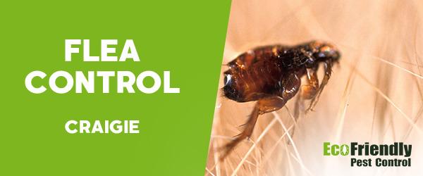 Fleas Control Craigie