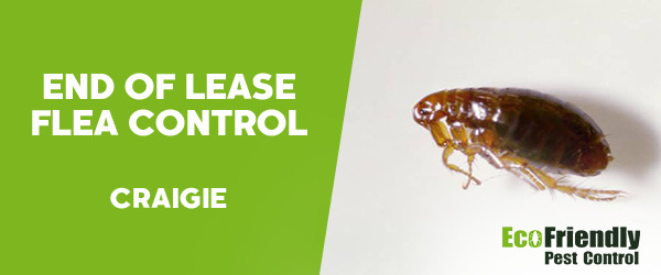 End of Lease Flea Control Craigie