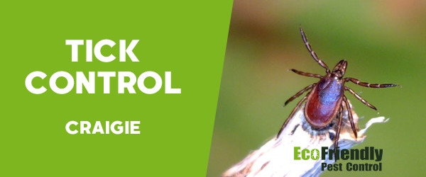Ticks Control Craigie