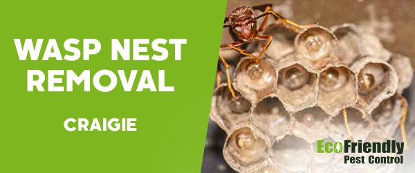 Wasp Nest Remvoal Craigie
