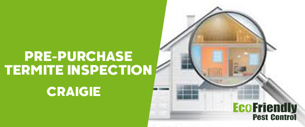 Pre-purchase Termite Inspection Craigie