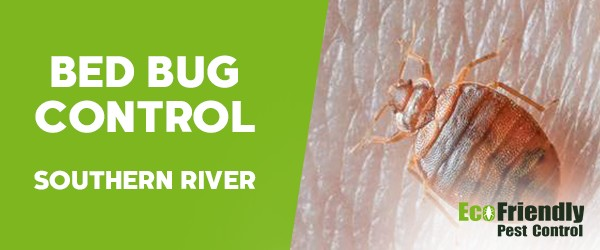 Bed Bug Control Southern River