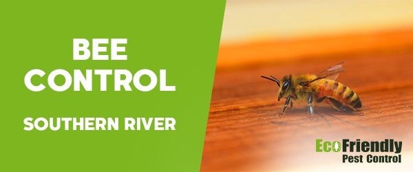 Bee Control Southern River