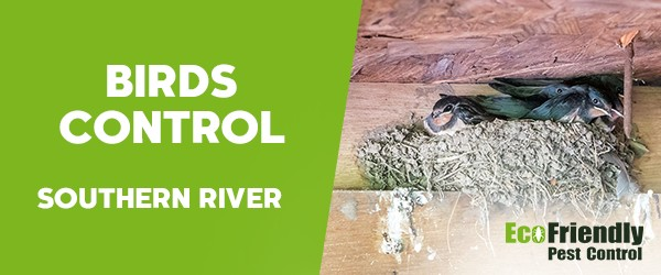 Birds Control Southern River