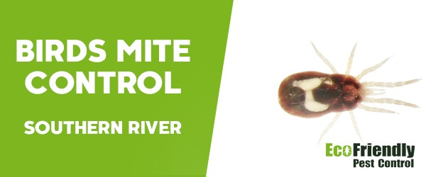 Bird Mite Control Southern River