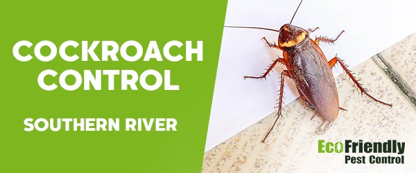 Cockroach Control Southern River